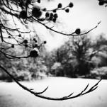 Winterstimmung Park Babelsberg